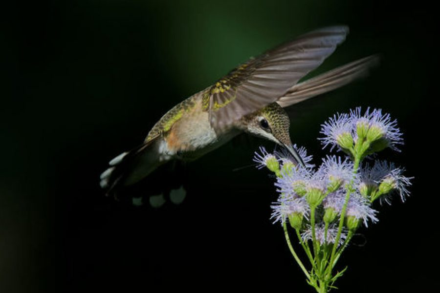Huff Post Op-Ed: Grow Native Plants: Help birds and eliminate fall garden chores