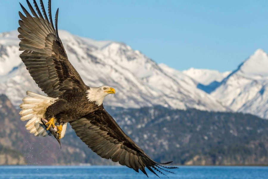 "Huff Post: Washington State, Vote ""Yes"" for Our Kids and Birds"