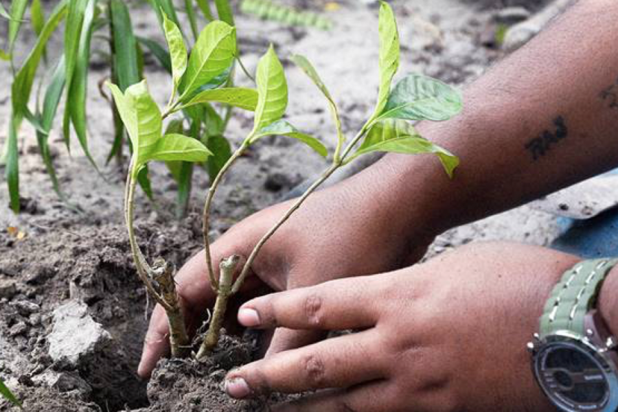 Fast Company: India Just Planted Nearly 50 Million Trees In 24 Hours
