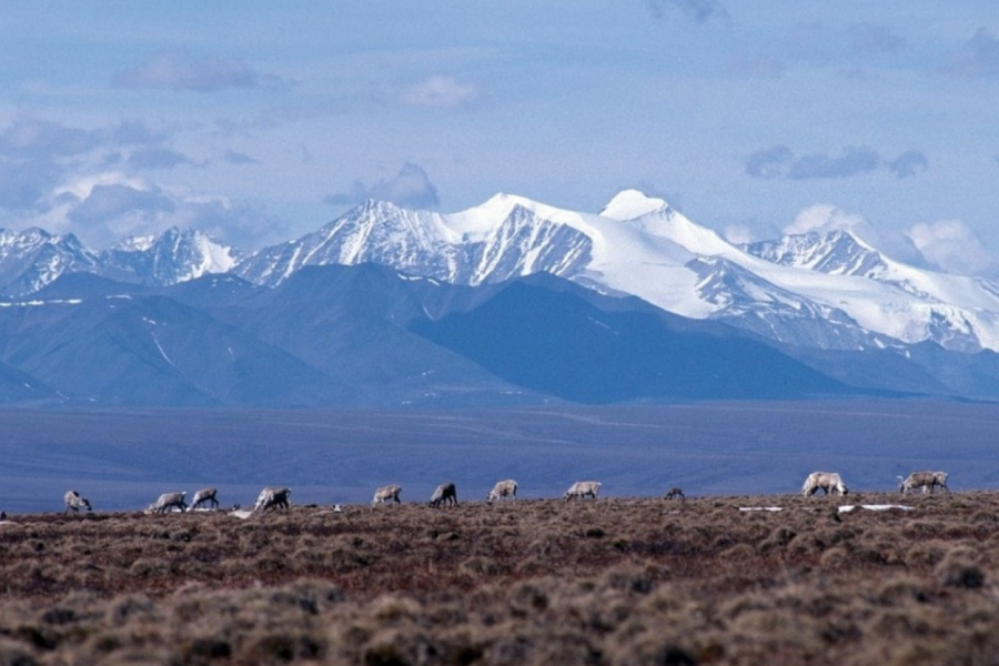 Wash Post: Senate votes to raise revenue by drilling in the Arctic National Wildlife Refuge