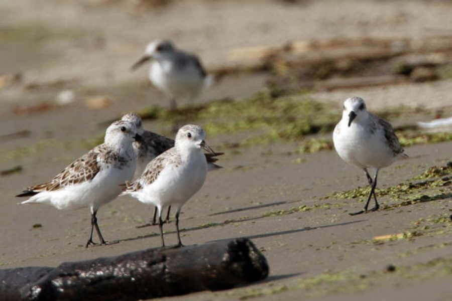 Fox 8 NO: For the Birds: Audubon LA creates innovative coastal restoration efforts to save its land