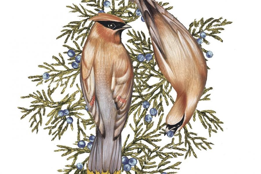 WSJ: Save the Songbirds: Plant These Shrubs and Bushes
