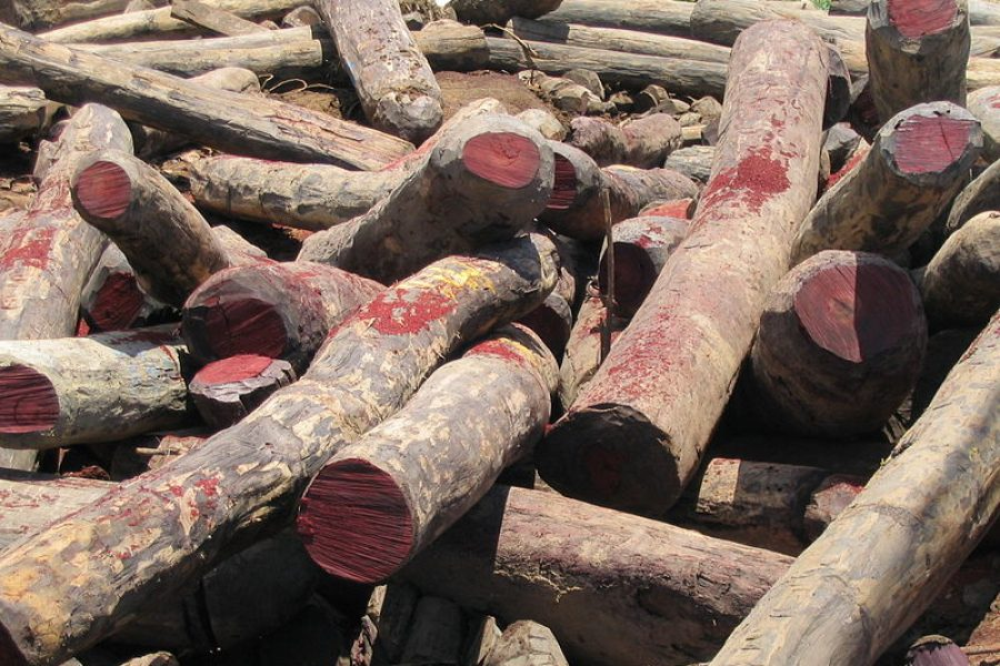 Victory for forests: Rosewood gets enhanced protection at wildlife summit