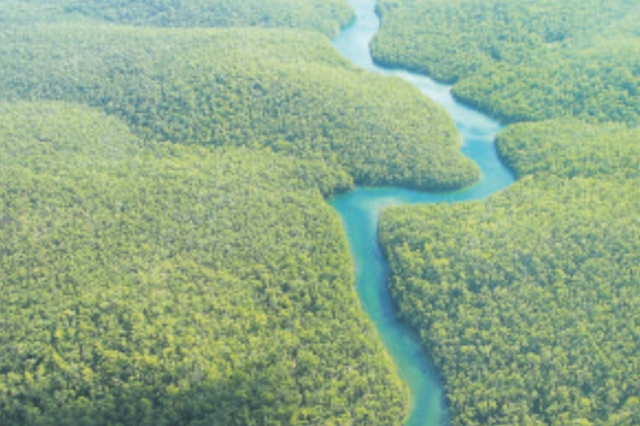 Aspen Times Weekly: Amazon Prime: Seeing the Rainforest for the Food