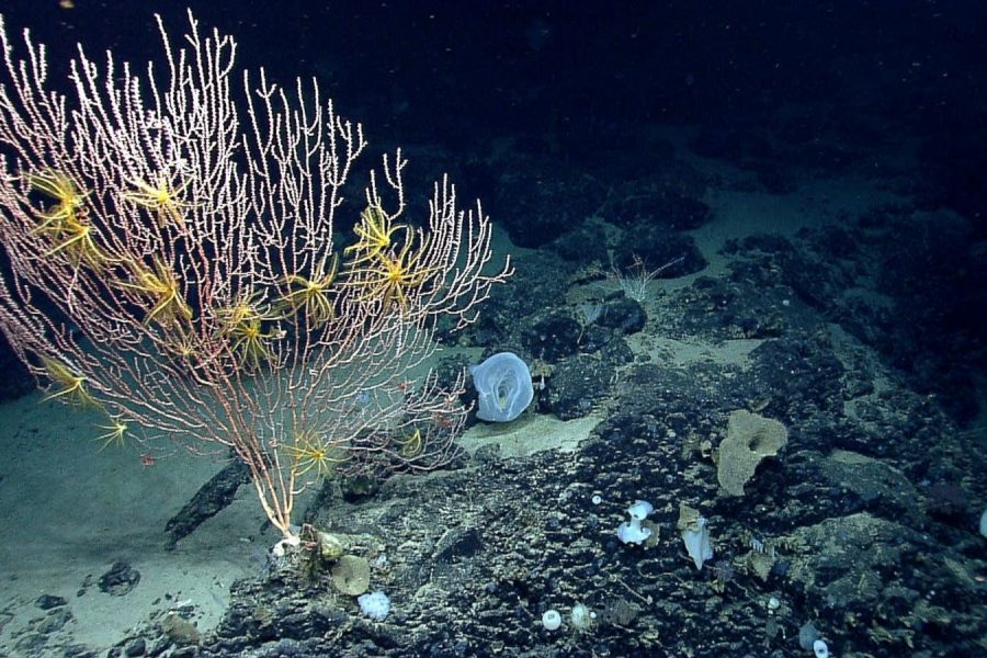 AP: Obama: Oceans Key to Protecting Planet From Climate Change