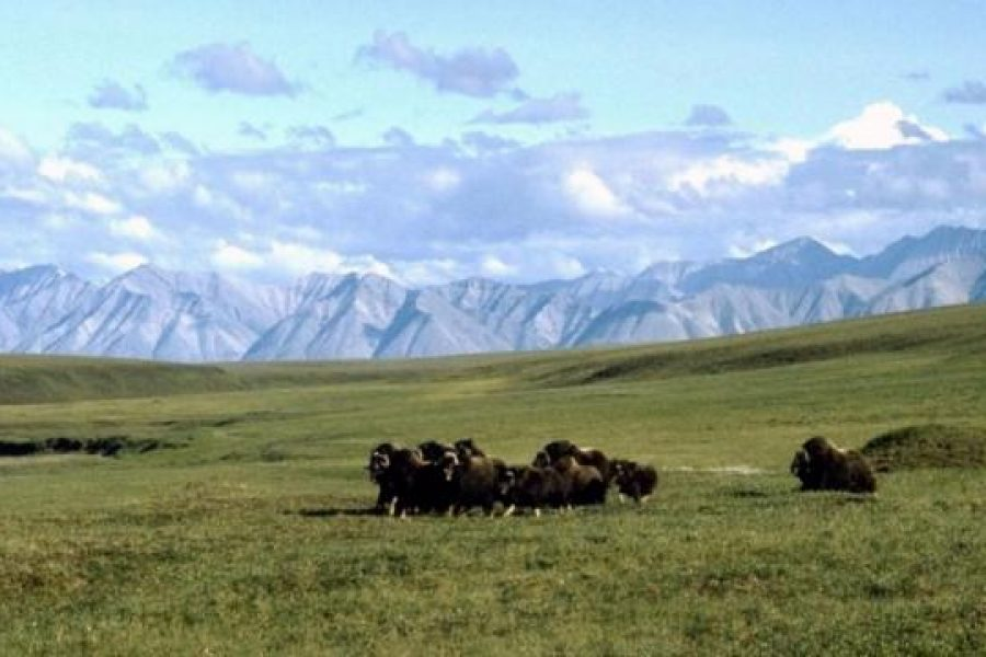The Hill: The benefits of opening Alaska's ANWR reserve wouldn't pay for the costs