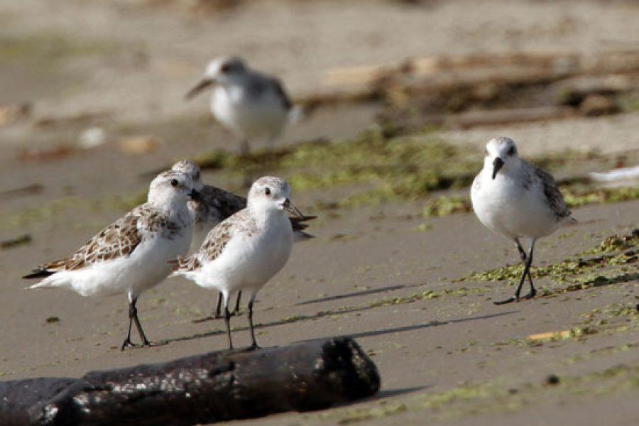 Fox 8 NO: For the Birds: Audubon LA creates innovative coastal restoration efforts to save its land