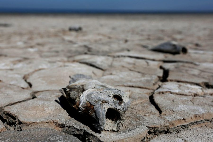 LA Times: Saline lakes are drying up across the West — and putting birds at serious risk