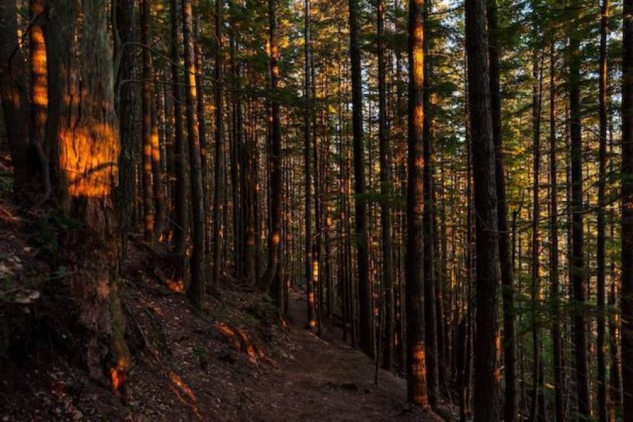 Supply Chain Transparency: Making the Consumer Connection for Forest Responsibility